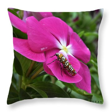 Throw Pillow featuring the photograph Ailanthus Webworm Moth Visiting My Garden by Verana Stark
