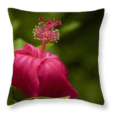 Akalewa Throw Pillow