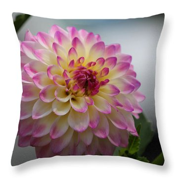 Throw Pillow featuring the photograph Ala Mode by Jeanette C Landstrom
