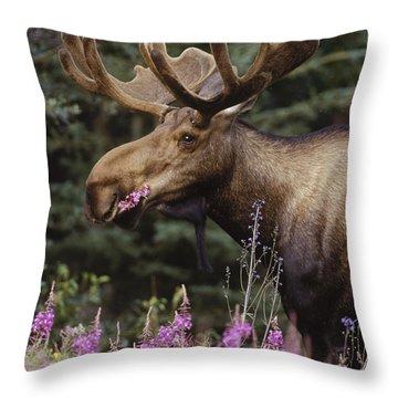 Alaska Moose Feeding On Fireweed Alaska Throw Pillow