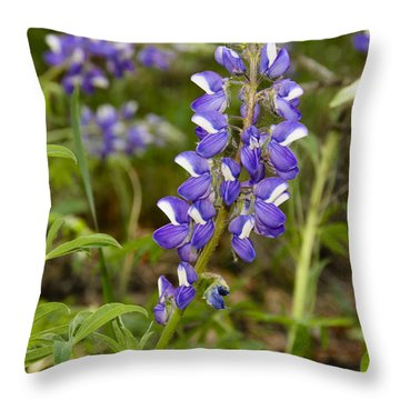 Alaskan Lupine In Denali Park Throw Pillow