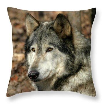 Alaskan Timber Wolf Portrait Throw Pillow