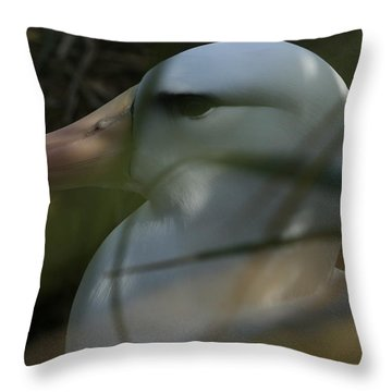 Throw Pillow featuring the photograph Albatross by Amanda Stadther