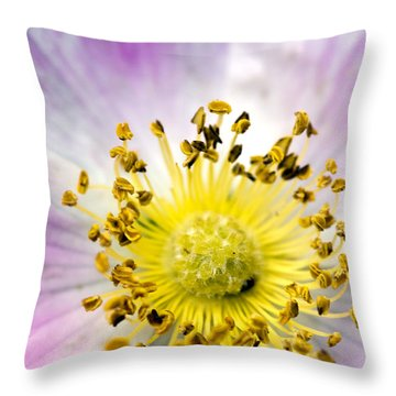 Alberta Wild Rose Throw Pillow