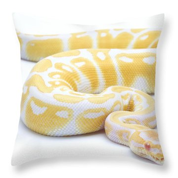 Albino Royal Python Throw Pillow by Michel Gunther