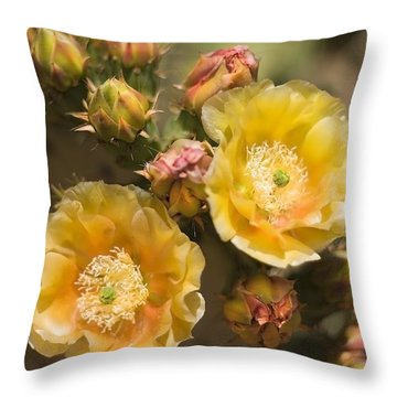 'albispina' Cactus Blooms Throw Pillow