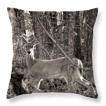 Throw Pillow featuring the photograph Alert by Elizabeth Sullivan
