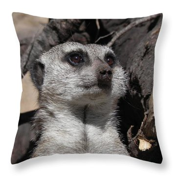 Alert Meerkat Throw Pillow
