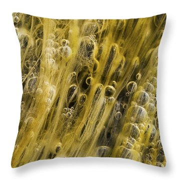 Algae Bubbles In Creek Throw Pillow