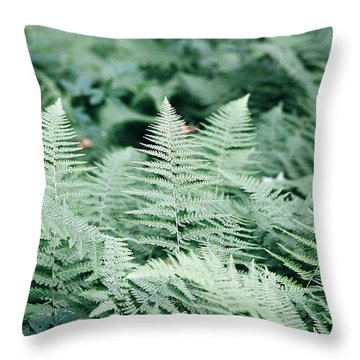 Throw Pillow featuring the photograph Algonquin Ferns by David Porteus