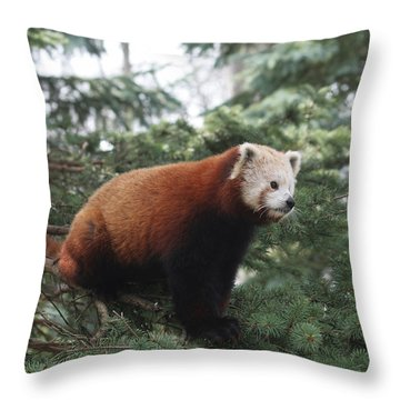 All Alone Throw Pillow by Judy Whitton