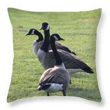 Throw Pillow featuring the photograph All Directions Covered by Robert Banach