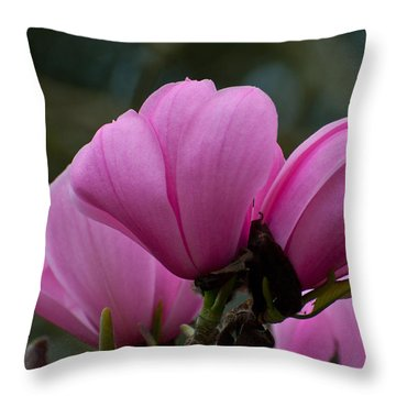 Throw Pillow featuring the photograph Pink Magnolia 2 by Sabine Edrissi