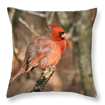 All Puffed Up For Winter Throw Pillow