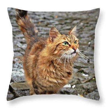 Alley Cat Throw Pillow