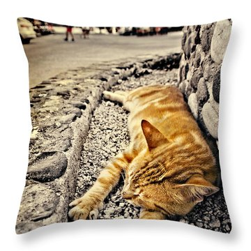 Alley Cat Siesta In Grunge Throw Pillow by Meirion Matthias