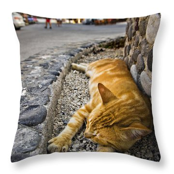 Throw Pillow featuring the photograph Alley Cat Siesta by Meirion Matthias