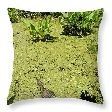 Alligator In Corkscrew Swamp, Florida Throw Pillow by Gregory G. Dimijian