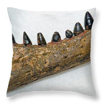 Alligator Jaw Fossil Throw Pillow by Millard H Sharp