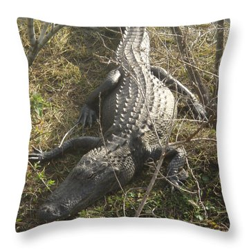 Throw Pillow featuring the photograph Alligator by Robert Nickologianis