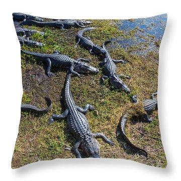 Alligators Along The Anhinga Trail Throw Pillow