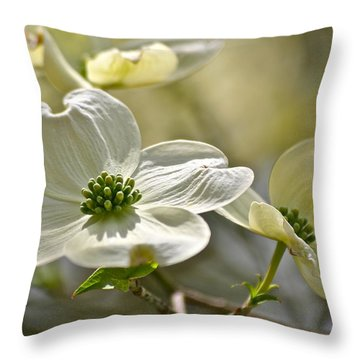 Alluring Dogwoods Throw Pillow