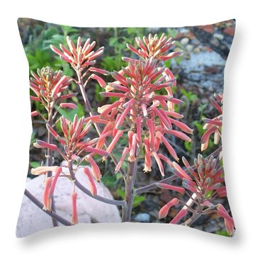 Throw Pillow featuring the photograph Aloe In Bloom by Belinda Lee