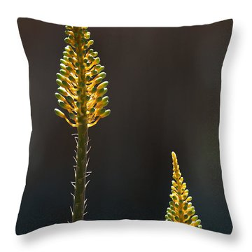 Aloe Plant Throw Pillow