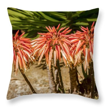 Throw Pillow featuring the digital art Aloe Triplets by Photographic Art by Russel Ray Photos