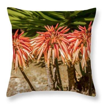 Aloe Triplets Throw Pillow