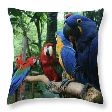 Aloha Kaua Aloha Mai No Aloha Aku Beautiful Macaw Throw Pillow