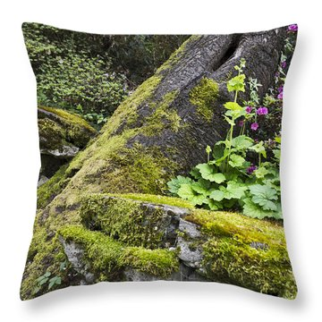 Along The Pathway Throw Pillow
