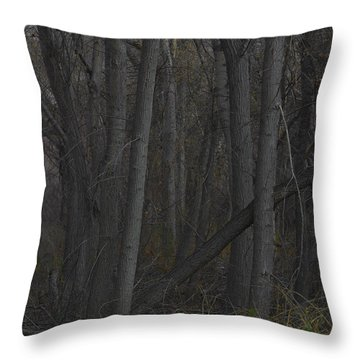 Along The Walking Path Number 11 Throw Pillow