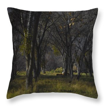 Along The Walking Path Number 21 Throw Pillow
