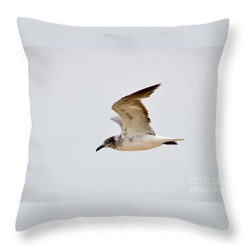 Alongside - Seagull Throw Pillow