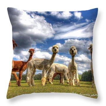 Alpacas Throw Pillow by John Loreaux