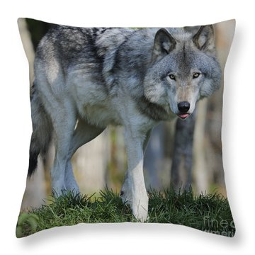 Alpha... Throw Pillow by Nina Stavlund