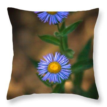 Alpine Aster Throw Pillow by Robert Bales