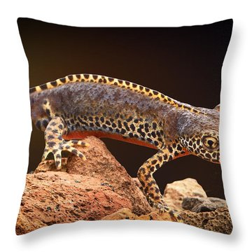 Alpine Newt Throw Pillow by Dirk Ercken