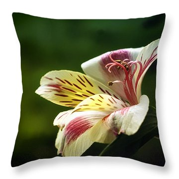 Alstroemeria One Throw Pillow