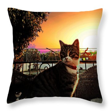 Throw Pillow featuring the photograph Altered Cats Cyprus Rudolph by Artists for Altered Cats Cyprus