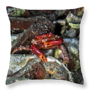 Am I Red? Throw Pillow