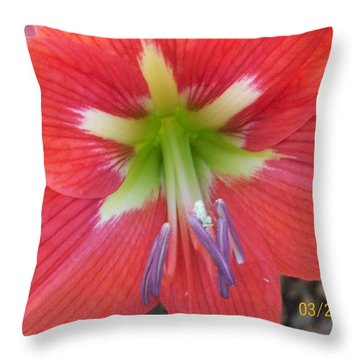 Throw Pillow featuring the photograph Amarylis by Belinda Lee