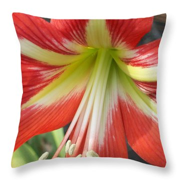 Throw Pillow featuring the photograph Amarylis Full Bloom by Belinda Lee