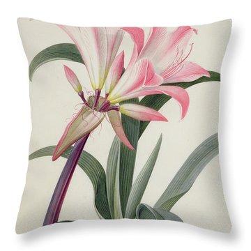 Amaryllis Belladonna, 1761 Throw Pillow