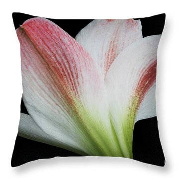 Amaryllis Throw Pillow by Judy Whitton