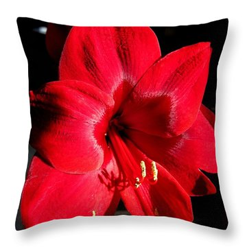Amaryllis Named Black Pearl Throw Pillow by J McCombie