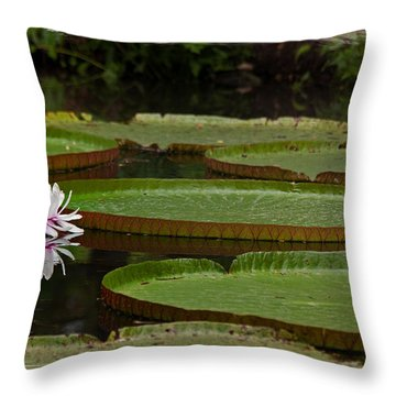 Amazon Lily Pad Throw Pillow