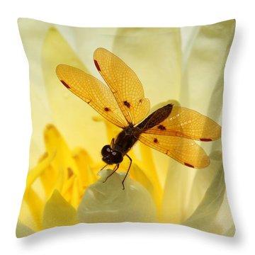 Amber Dragonfly Dancer Throw Pillow