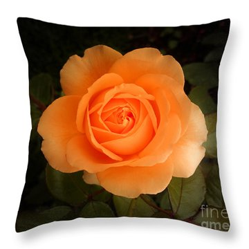 Amber Flush Rose Throw Pillow by Hanza Turgul